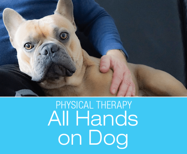 All Hands On Dog: Benefits of Physical Contact