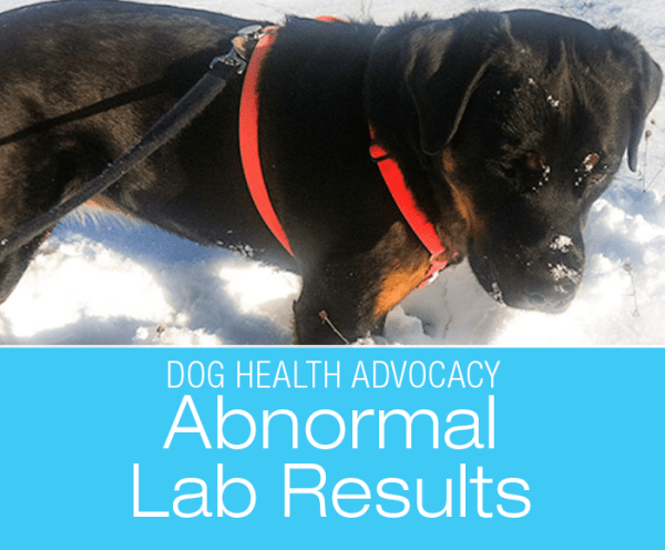 Abnormal Lab Results: How Far To Take It When The Dog Isn't Sick?