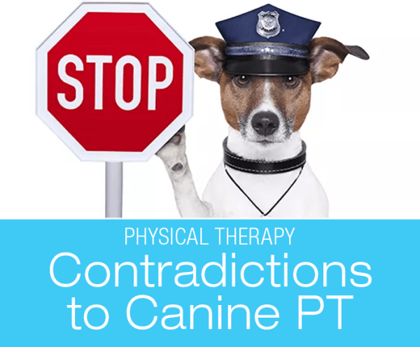 Contradictions to Canine Physical Therapy