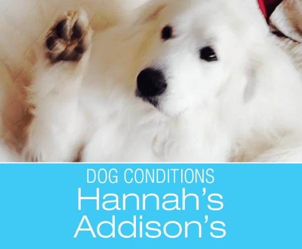 Hannah Gets Ill: Addison's Disease Awareness—What's Wrong With Hannah?