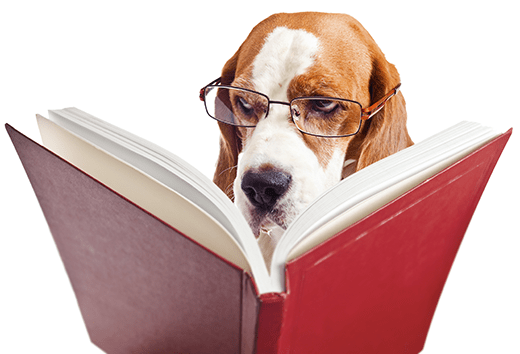 Physical Therapy - A Practical Method to manage your Dog's Care Plan