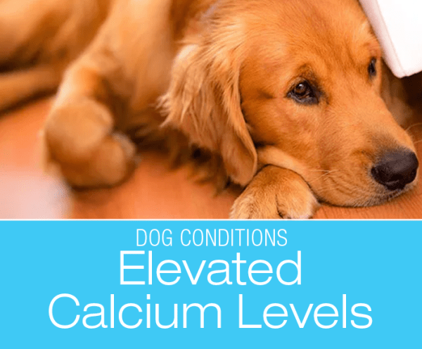 Elevated Calcium Levels in a Dog: Too Much Calcium in the Blood Is a Diagnosis?