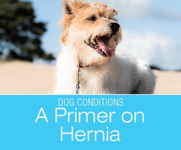 A Primer on Diaphragmatic Hernia in Dogs