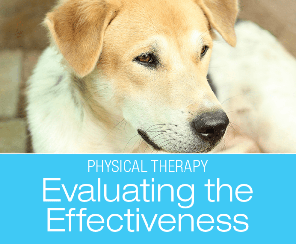 Evaluating Canine PT Effectiveness: Is the Treatment Necessary? Is It Working?