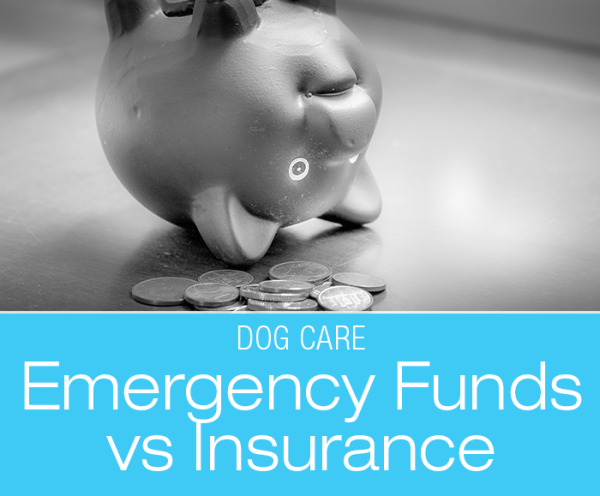 Dog Care Emergency Fund: My Take on Savings Accounts and Emergency Funds versus Pet Health Insurance