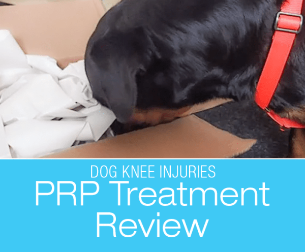 PRP for CCL Injuries: Cookie's PRP Treatment for Partial Cruciate (CCL/ACL) Tear Update and Considering the Future