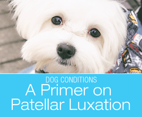 A Primer on Patellar Luxation in Dogs