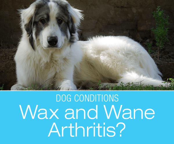 Dog Arthritis Acting Up? If You Catch Yourself Using These Words, Consider an Abdominal Ultrasound