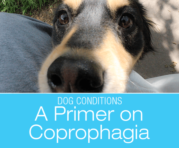 A Primer on Coprophagia: Why Do Dogs Eat Poop?
