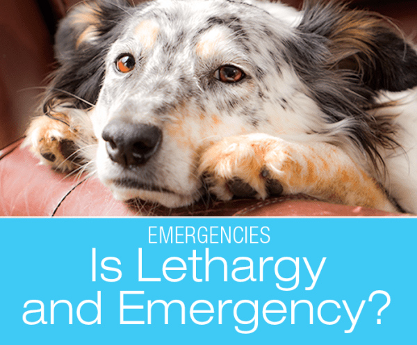 Is Severe Lethargy an Emergency?