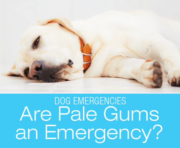 Are Pale Gums an Emergency?
