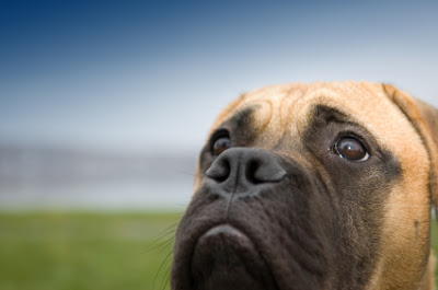 Is an Unresponsive Dog an Emergency?