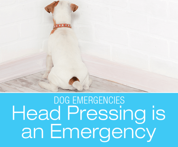 Is Head Pressing an Emergency?