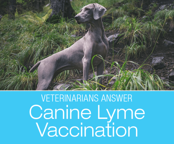 Canine Lyme Vaccination: Veterinarians Share Their Opinion About Lyme Vaccination in Dogs - Yay or Nay?