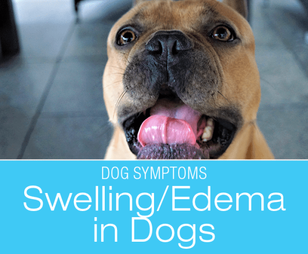 Swelling (Edema) in Dogs