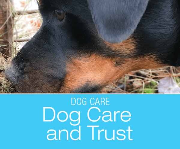 Dog Care and Trust: How Do I Know When There Is Something Wrong with Cookie's Foot?