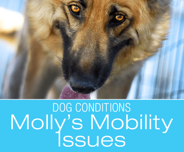 Misdiagnosis in a Dog: When Symptoms Are Not What They Seem—Molly's Hemangiosarcoma