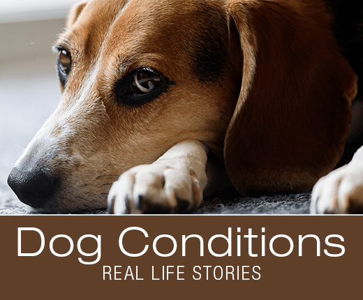 Milo Survived what many Dogs Don't: #Preventpetsuffocation