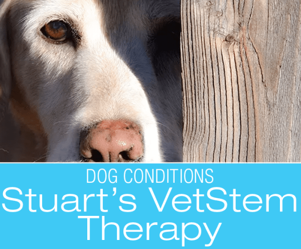VetStem Therapy for Dogs: Back to Playing Fetch--Stuart's Story