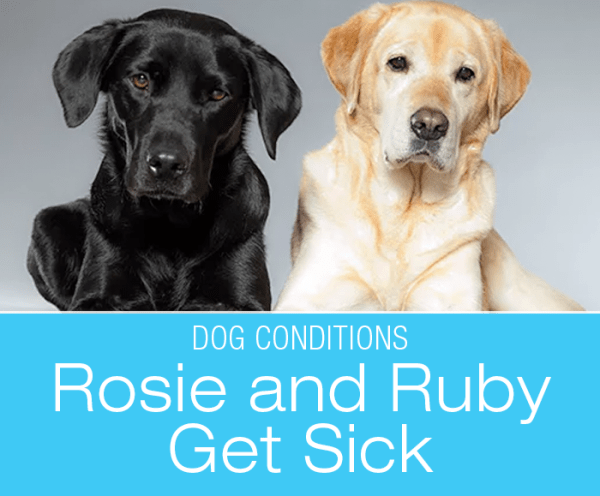 Two Dogs Sick at the Same Time: Rosie and Ruby's Story