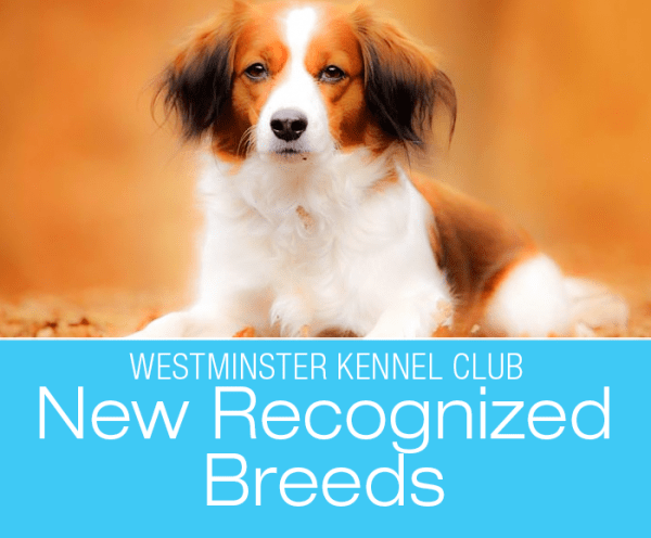 143rd Westminster Dog Show: An Old Hound, A New Hound, and a 'Coy-ker-I can't-pronounce- it-hond'!