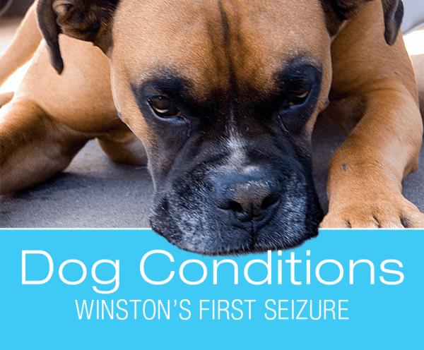 Seizures in Dogs: Winston's first seizure.