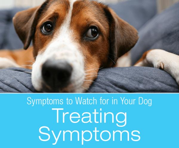Dog Symptoms: Treating Symptoms vs. Treating The Cause