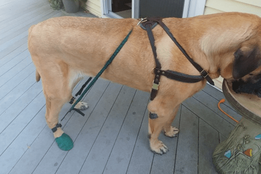Dog Strengthening Tools: Resistance Bands