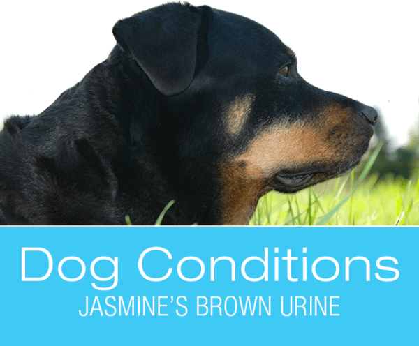 Brown Urine and Difficulty Walking in Dogs: Jasmine's Pee is Brown