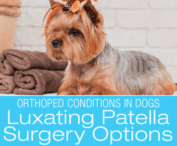 Canine Luxating Patella: Surgical Repair Options for Patellar Luxation in Dogs