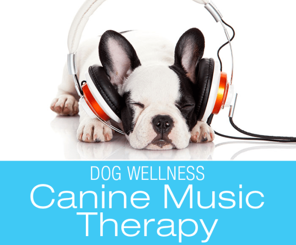 Music Therapy for Dogs: The Role Music Can Play In Your Dog's Health, Wellness and Happiness