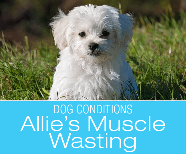 Muscle Wasting in Dogs: What Would You Do if It Was Your Dog? Allie's Story