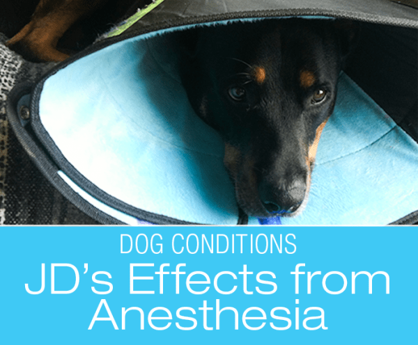 Adverse Drug Reactions in Dogs:: JD's Anesthesia Effects