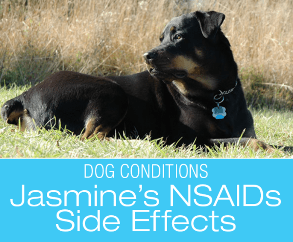 Adverse Drug Reactions in Dogs: NSAIDs