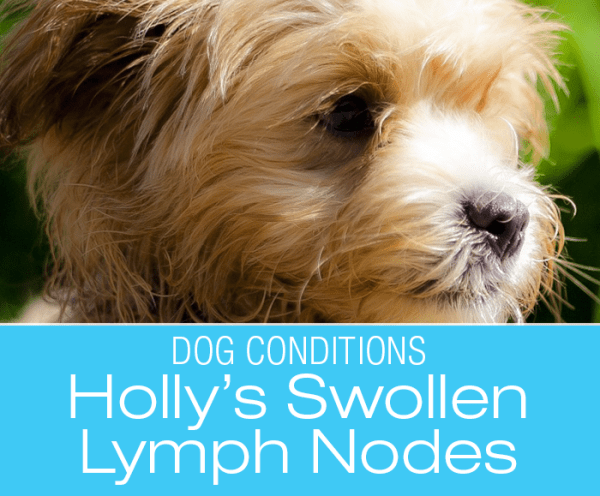 Enlarged Lymph Nodes in a Dog: Holly's Story