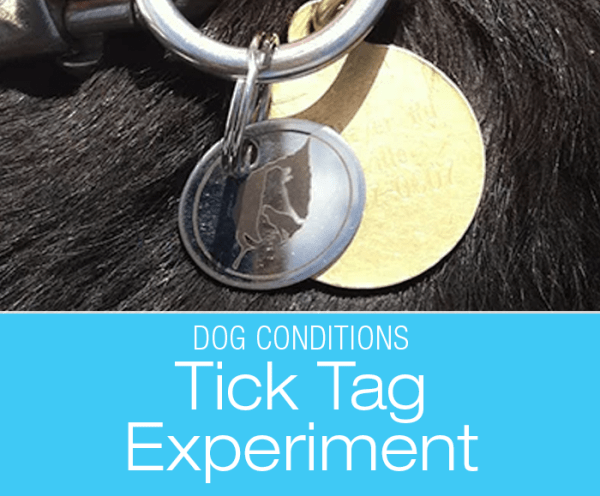 Tick Prevention in Dogs Experiment: Ticked Off at the Tick Situation—Tick Tag Results Evaluation