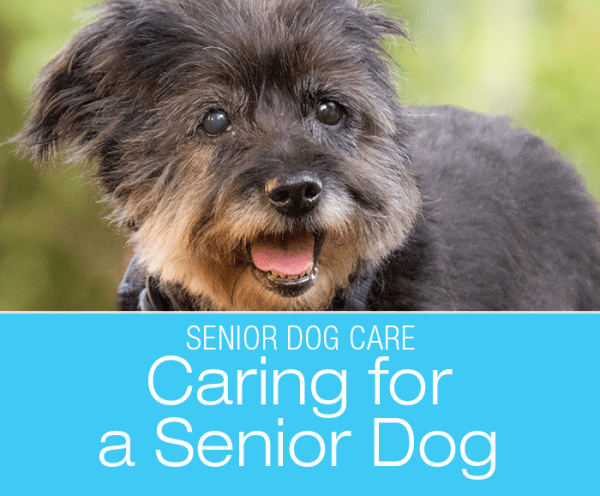 Senior Dog Care: Should I Be Doing Things Differently When My Dog Got Older?