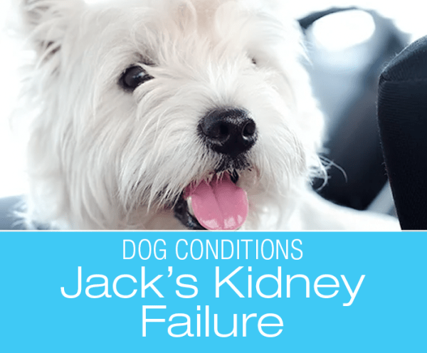 Pre-Anesthetic Blood Tests: Jack's Test Reveals Kidney Failure