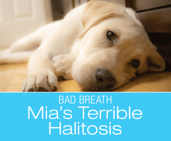 Severely Stinky Breath in a Dog: Mia's Case of Terrible Smelling Breath