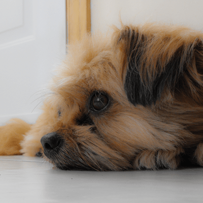 My Dog's Vomiting: Examining the Vomit