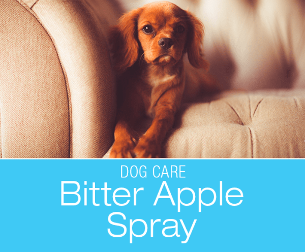Does Bitter Apple Spray Work: Is It a Safe and Effective Way to Prevent Licking and Chewing?