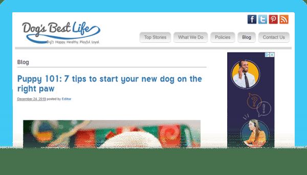 Best Dog Blogs of 2020: Dog's Best Life