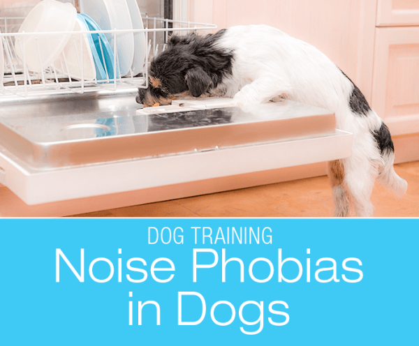 Noise Phobias in Dogs: Conquering The Evil Dishwasher Monster