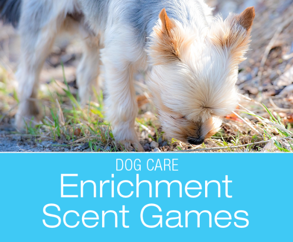 Scent Games Enrichment for Dogs