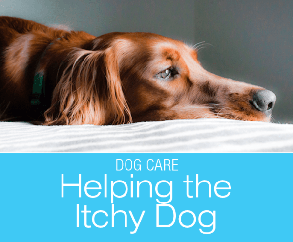 Helping the Itchy Dog: How to Alleviate Your Dog's Allergies