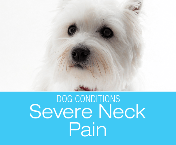 Severe Neck Pain in a Dog: Andy's Story