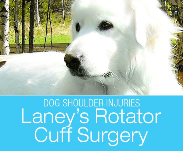 Rotator Cuff Repair in a Dog: Laney's Shoulder Injury
