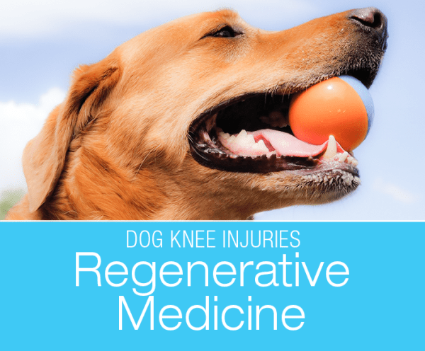 Regenerative Medicine and CCL Tears: My Two Cents on Regenerative Approach to Treating Cruciate Ligament Tears in Dogs