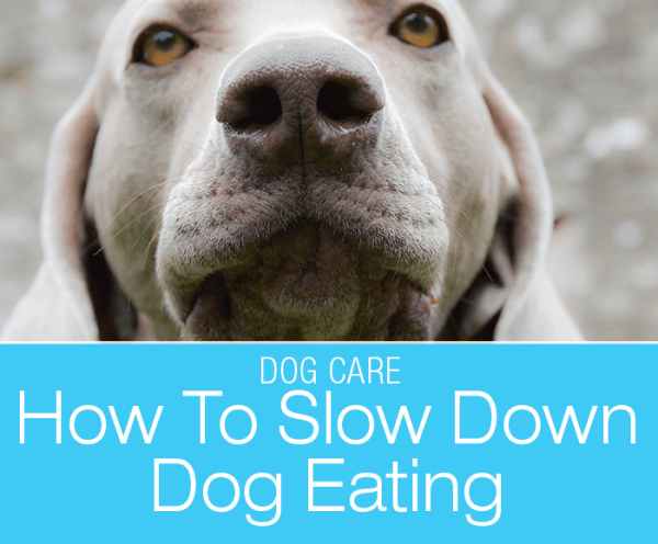 How to Slow Dog Eating: How Can You Make Your Dog Eat Slower?