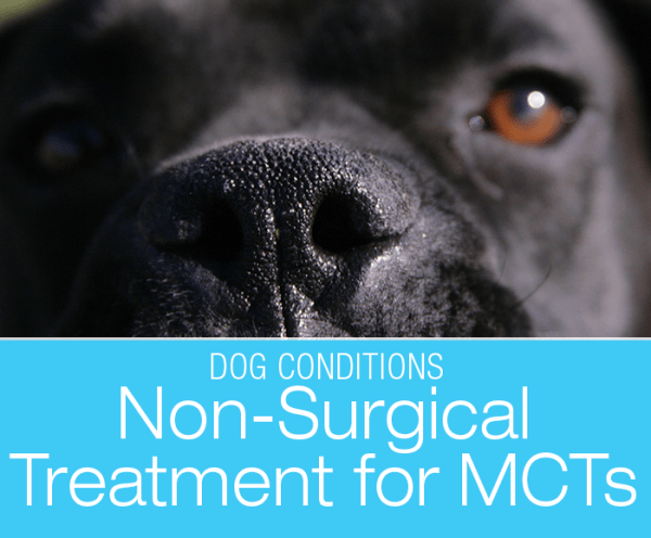 Mast Cell Tumors in Dogs: Non-Surgical Treatment